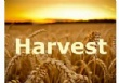 Harvest Celebrations at Trinity Church